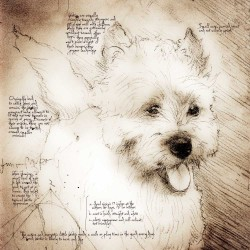 """Westie Happy"" Detail of a Da VInci style drawing"