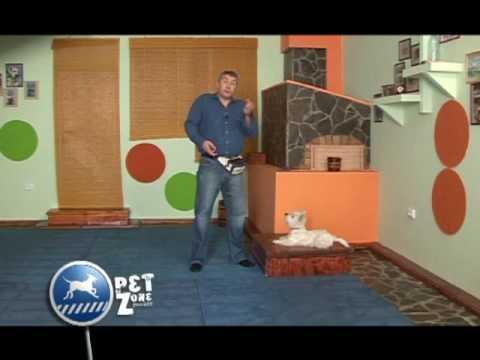 Gabriel Cocu prezinta emisiunea Pet Zone - dresaj Westie