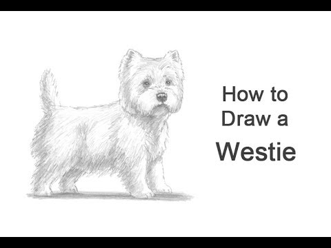 How to Draw a Dog (West Highland White Terrier/ Westie)